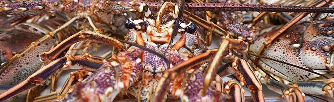 Lobstering Key West Reef Charter