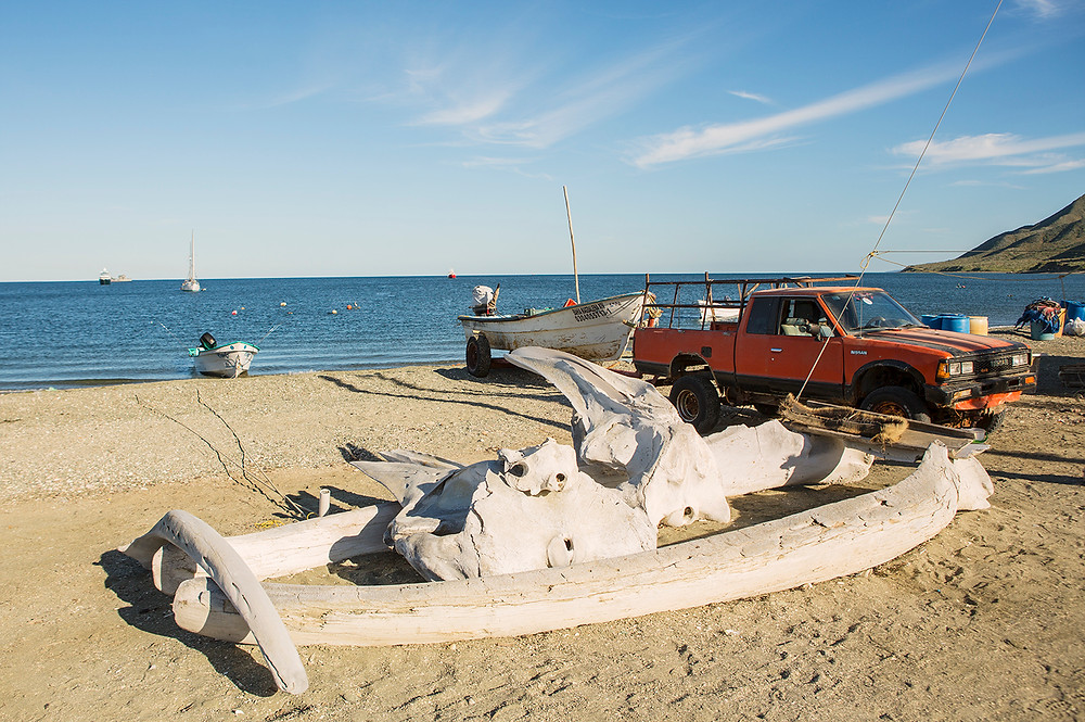 Whale Bones Magdalena Bay Mexico