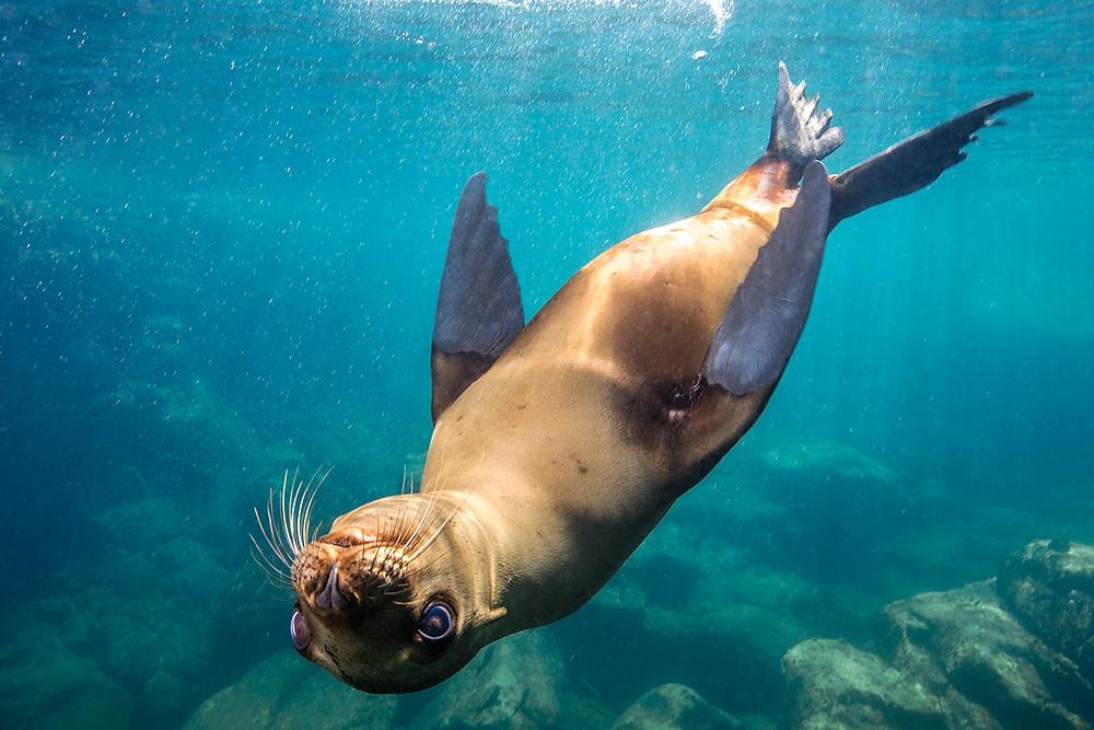 Sea Lion Mexico