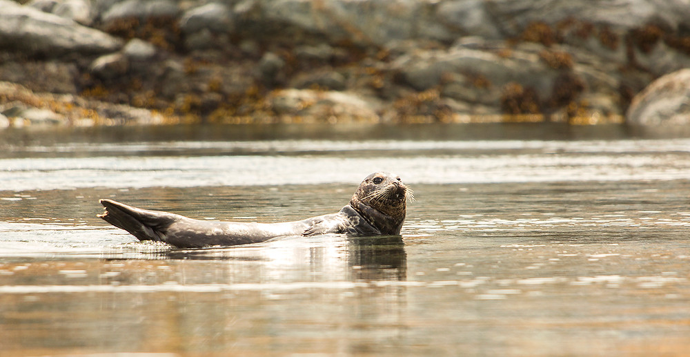 Seal Dent Island Lodge and Marina
