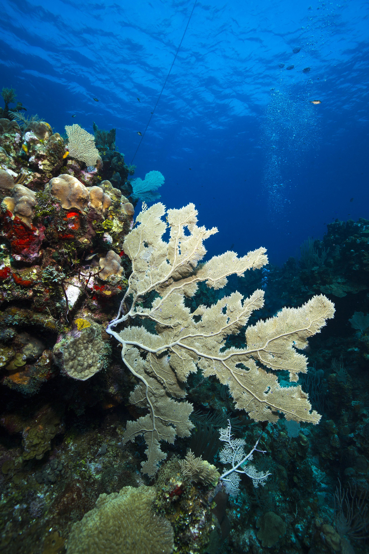 Underwater Photography Travel