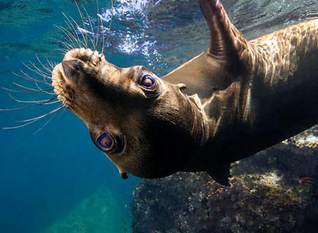 Swimming with Sea Lions in La Paz, Mexico