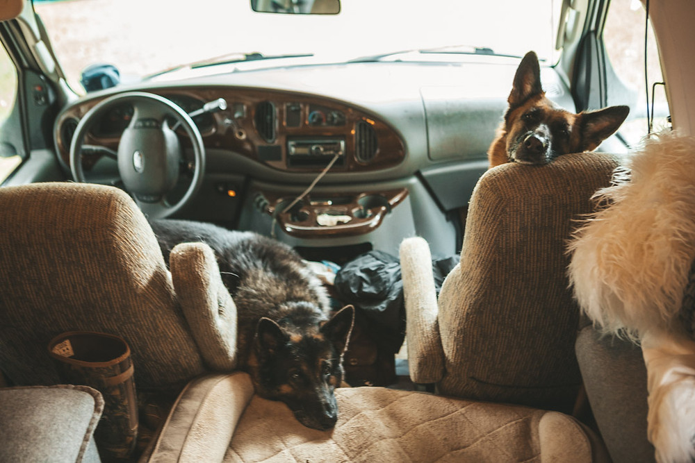 Road trip in RV with Dogs
