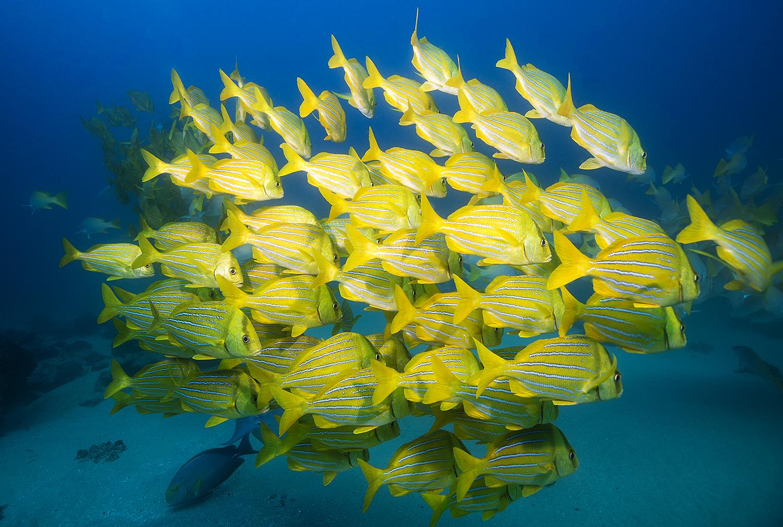 Travel Scuba Diving