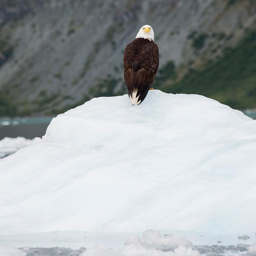 eagle4 copy