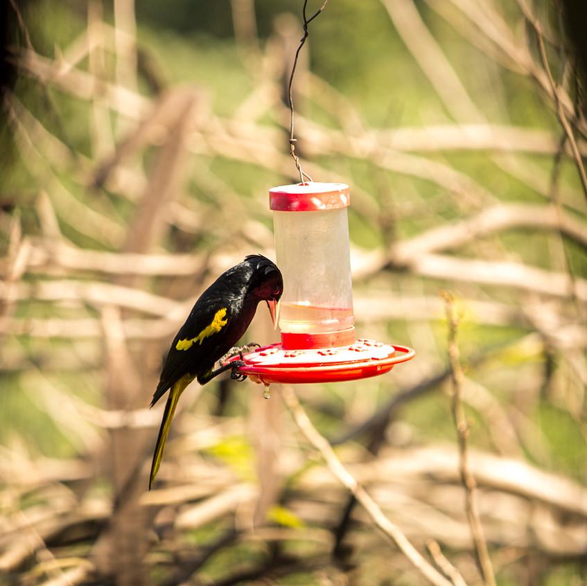 Pv bird copy