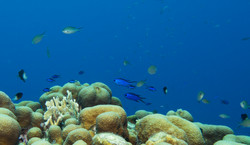 Central America Travels Reef