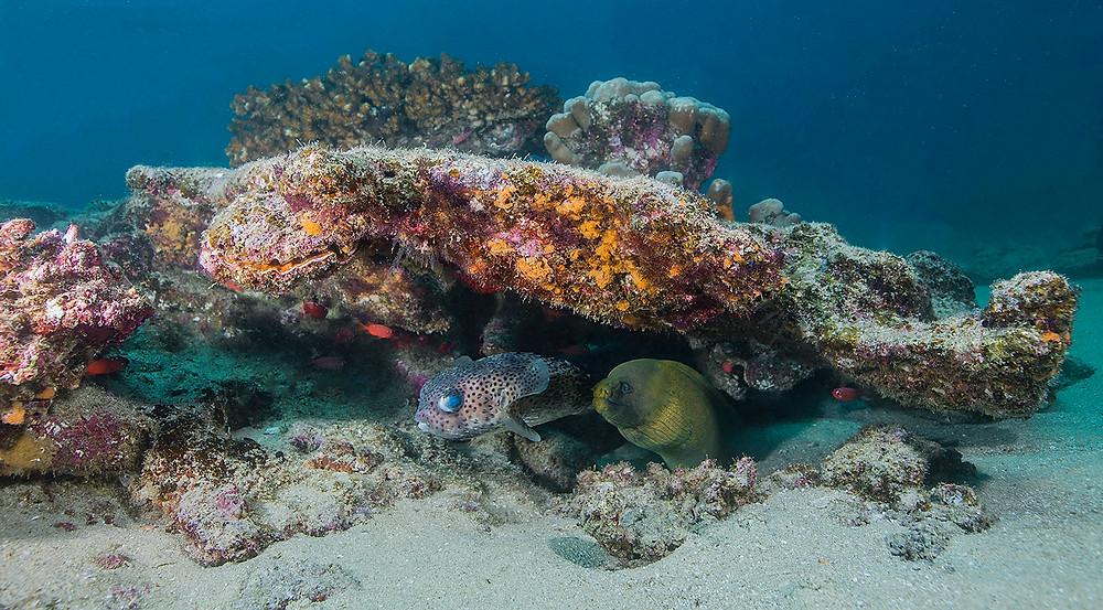 Cabo Pulmo Reef Mexico