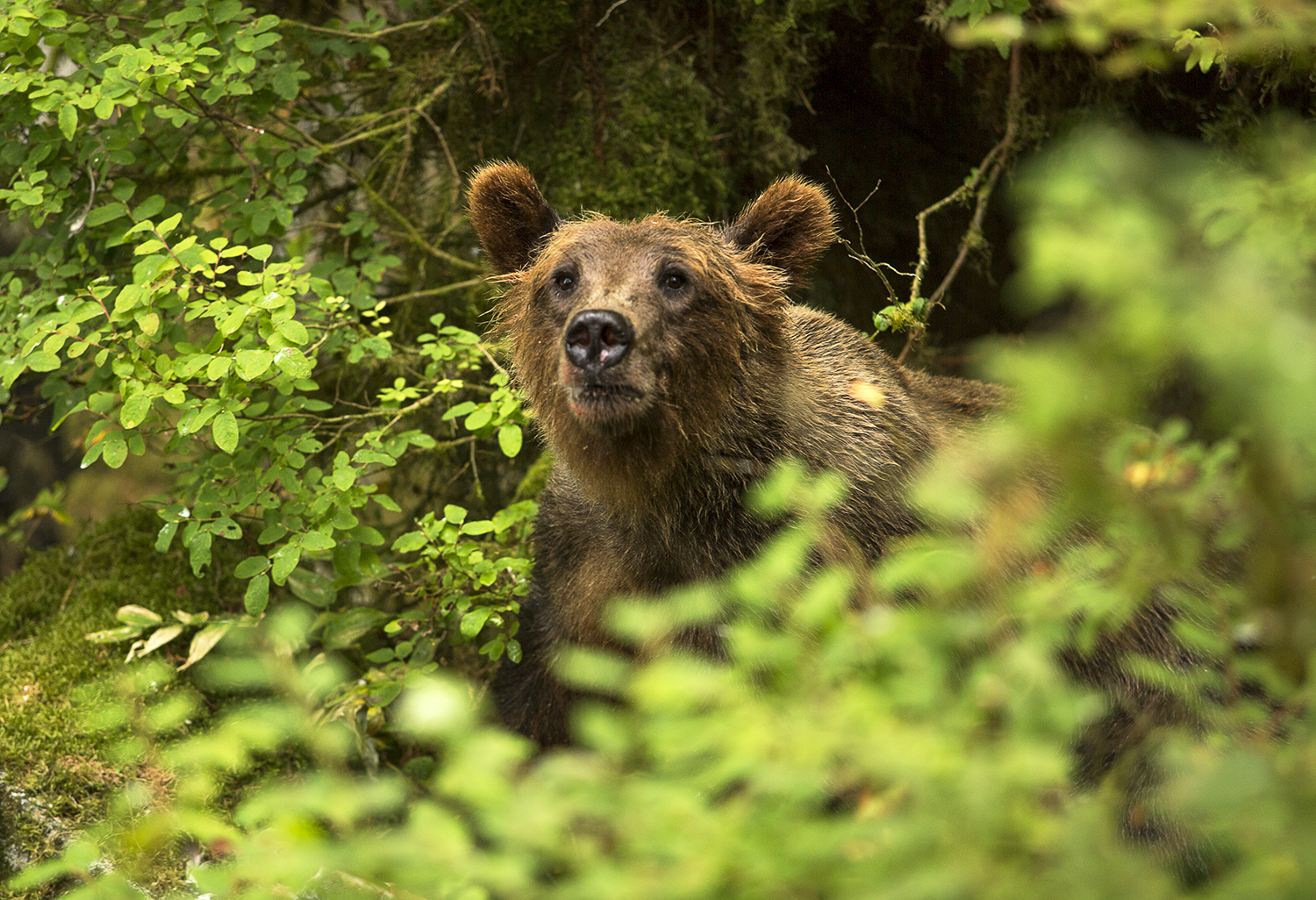 Travel Photography Alaska Bear