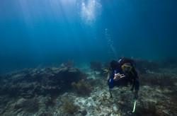 Scuba Diving - Key West