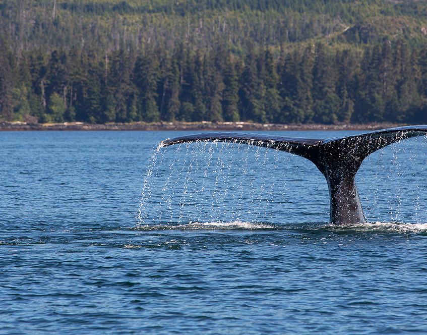 whale tailin copy