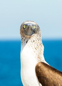 Nature Photography Bird