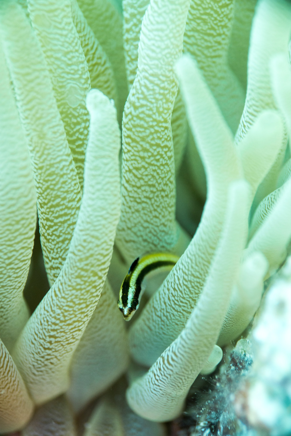 Bonaire Macro diving