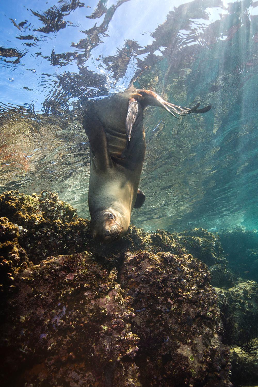 Sea Lions Los Islotes Mexico