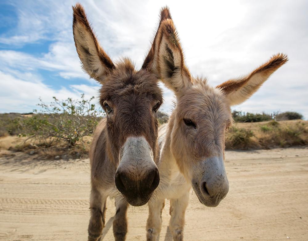 Donkey East Cape Drive