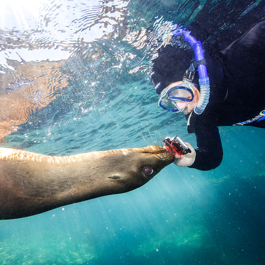 silly seal copy