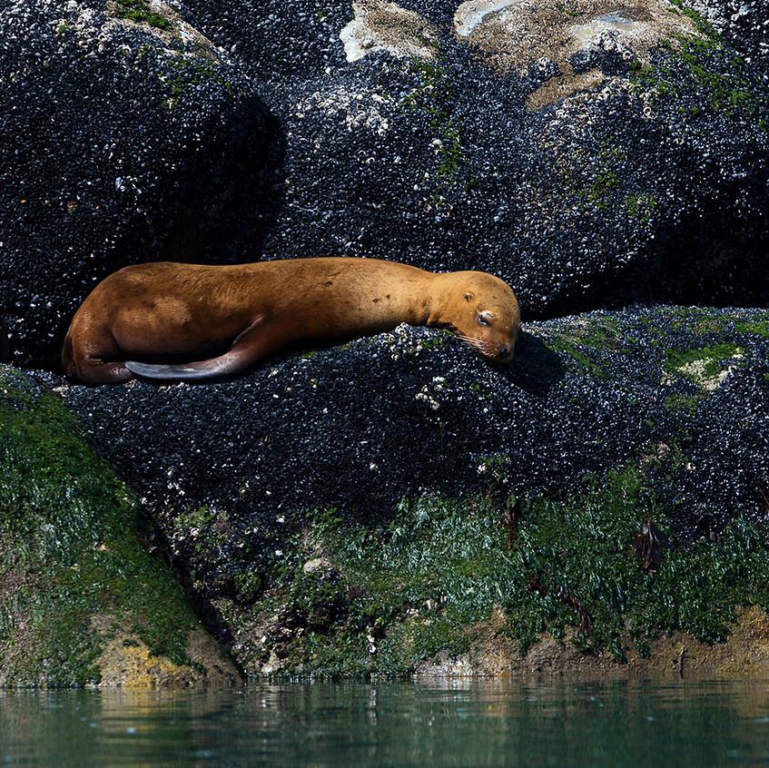 sleep seal copy