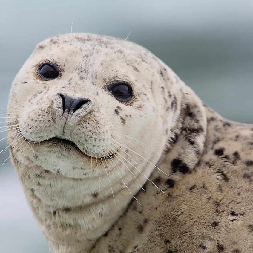 seal heads copy