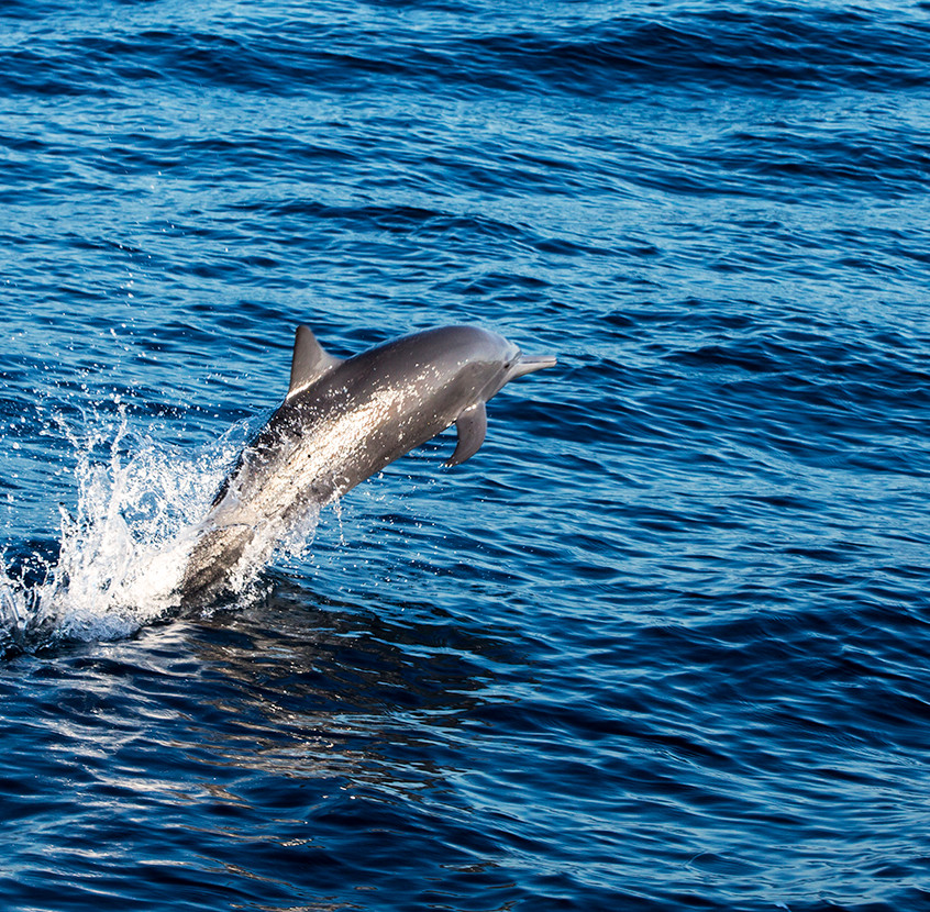 spinner dolphin 7 copy