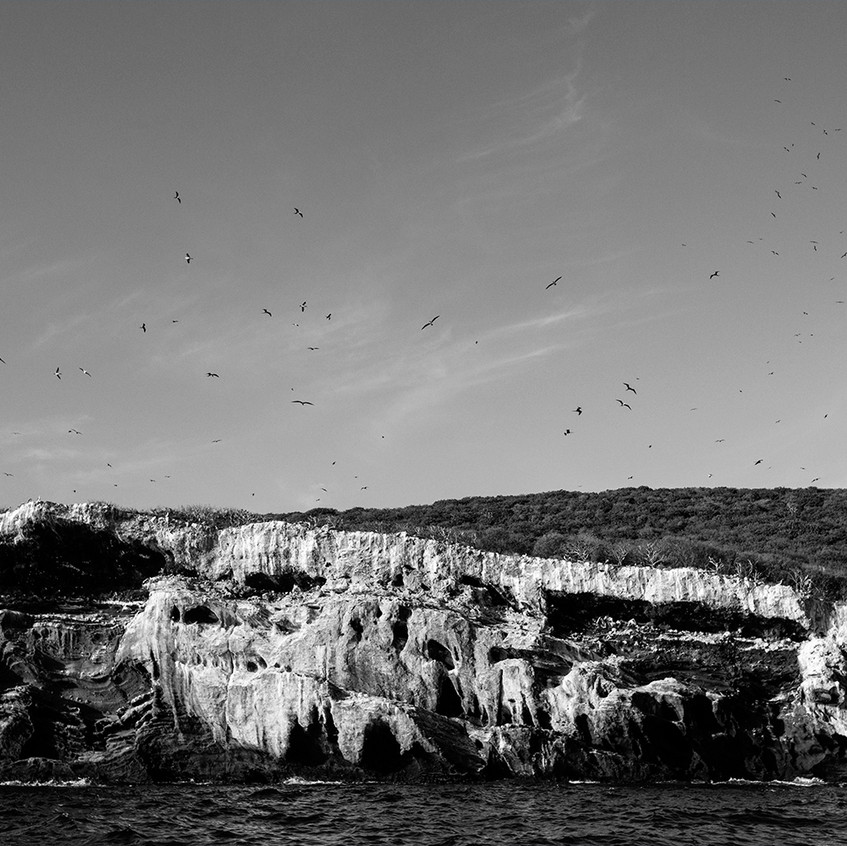 BW bird island copy