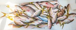 Snapper fishing Charter Key West