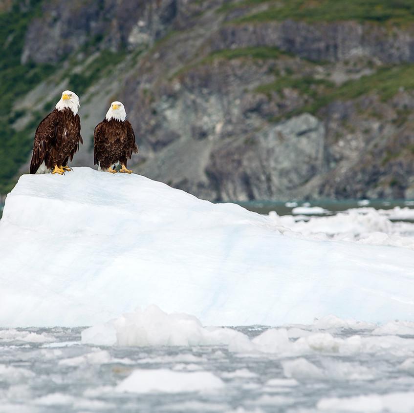 eagles2 copy