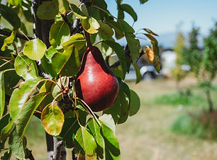 Forage and Feast _94.jpg