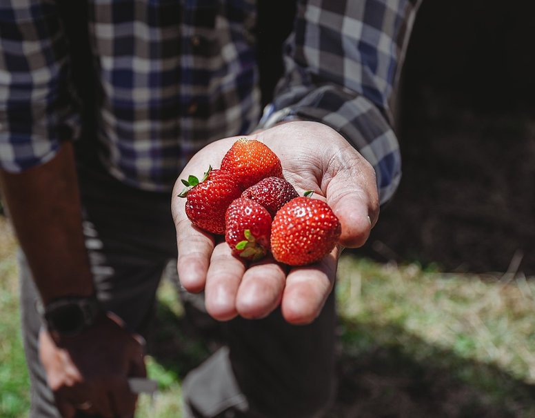 Forage and Feast _211.jpg