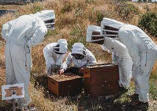 Tiaki Bees Wanaka