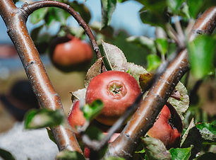 Forage and Feast _100.jpg