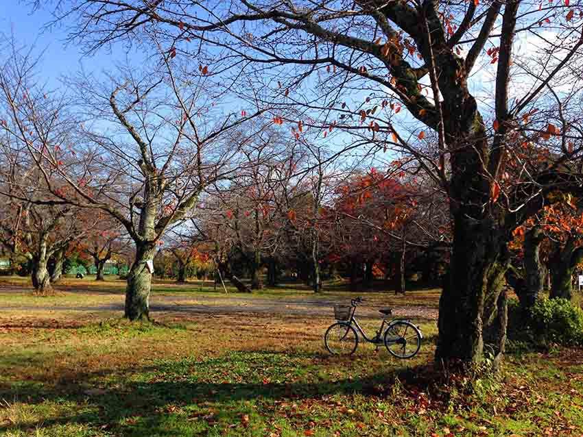 嵐山公園地方大,有些角落其實沒甚麼人,是野餐的好地方。