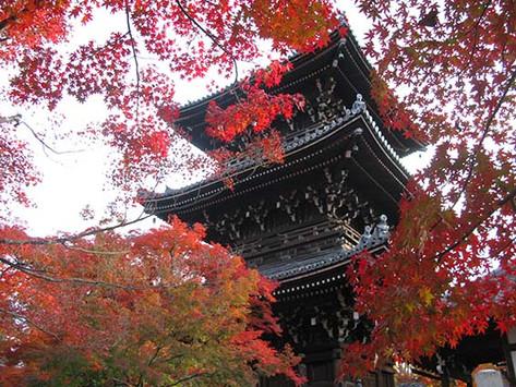 京都紅葉景點 真如堂