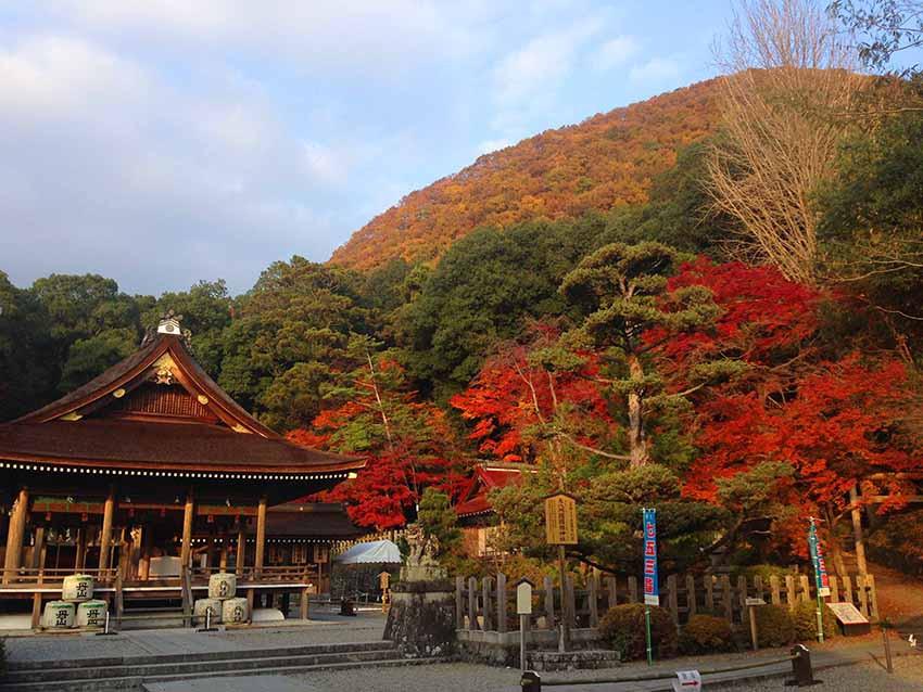 出雲大神宮的本殿與紅葉,後面的千年山也開始轉黃了。
