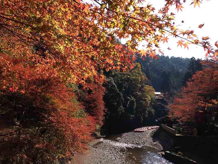 還未爬上神護寺,紅葉風景就這樣美了,真不愧是京都的高雄。