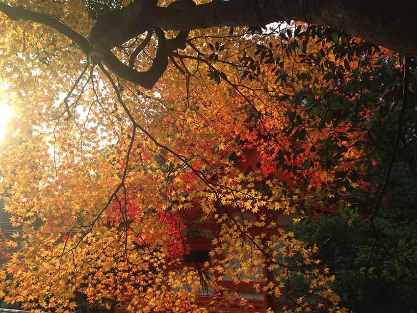 出雲大神宮的日落景色也相當不錯。