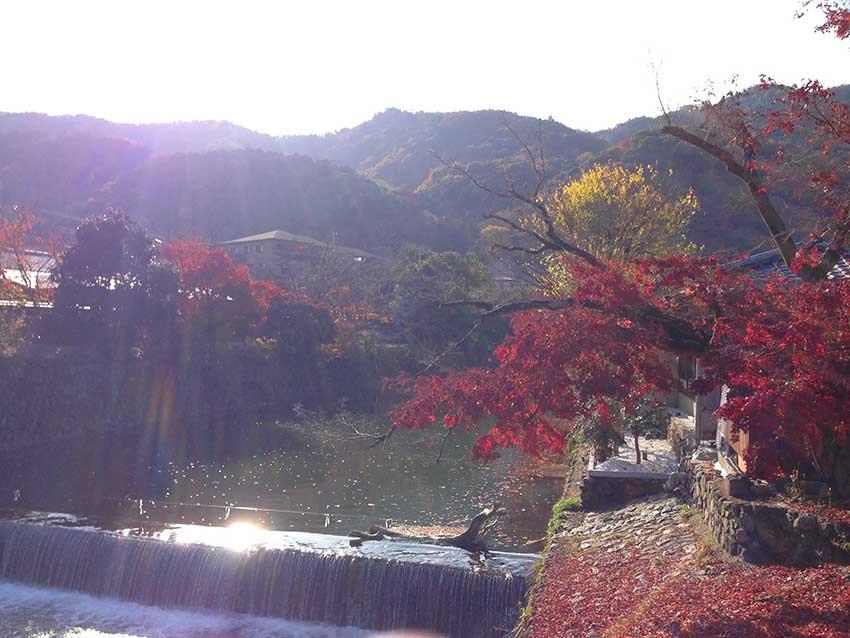 京都嵐山加上秋天的紅葉和陽光,可謂美不勝收。