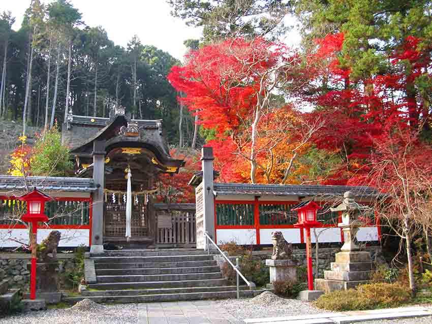 紅葉包圍著神社內的八幡宮。