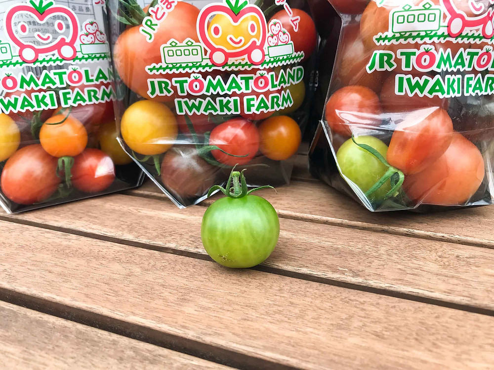 綠色番茄怎麼選?