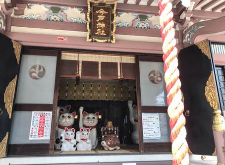 日本貓旅|東京淺草・今戶神社