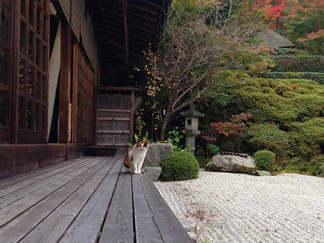 京都紅葉景點 金福寺