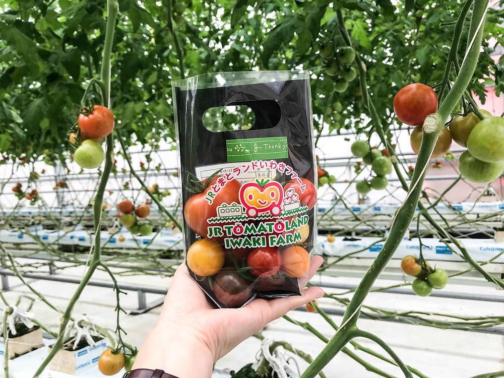 將番茄放進這個小袋子