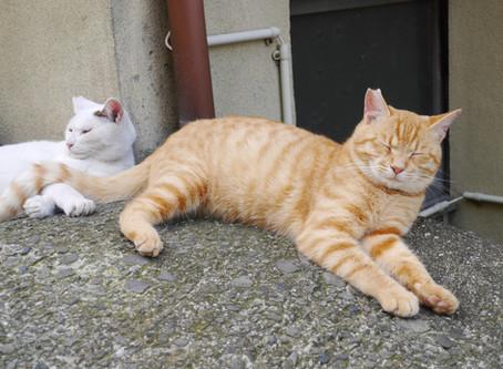 日本貓旅|香川・男木島・瀨戶內海最紅貓島