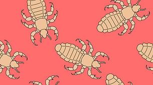 lice-babies-2160x1200.jpg