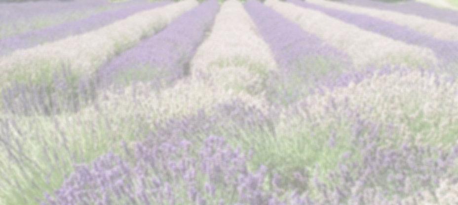 Lavender_edited_edited_edited.jpg