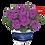 Thumbnail: Пеларгония плющелистная Moonflair