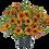 Thumbnail: Petchoa Петхоа BeautiCal