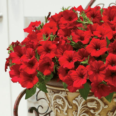 Pot Sufinia Deep Red.jpg