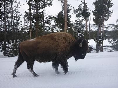 Elk reguge 2.JPG