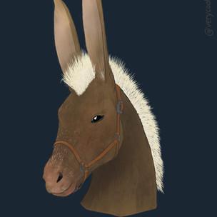 A Horse Named Rabbit