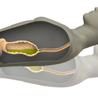 Body Cavity Side.jpg